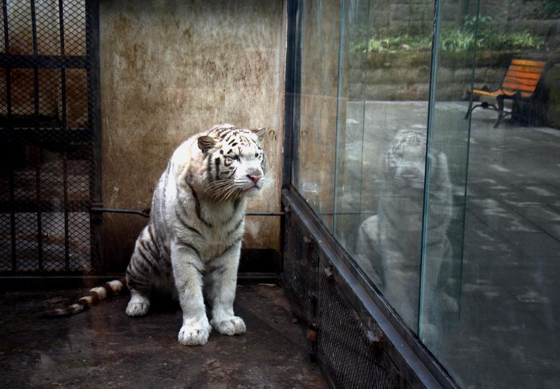 万州西山公园动物园的部分动物