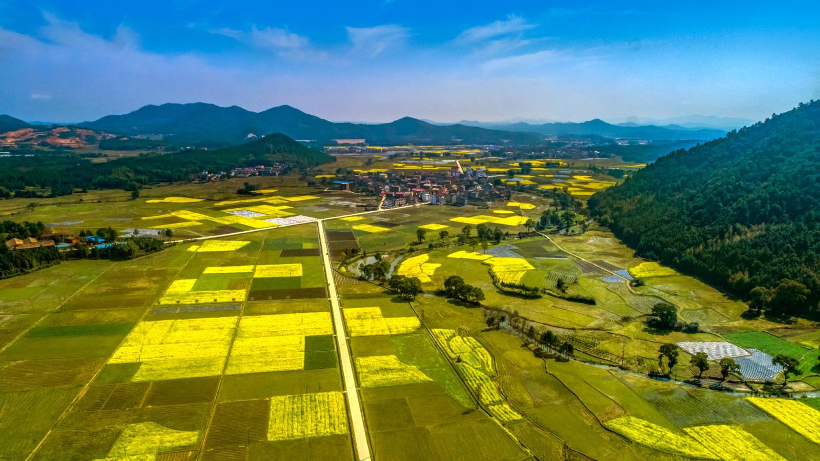 春天里一道美丽风景,金江油菜花迎春绽放